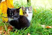 Iki küçük yavru kedi — Stok fotoğraf