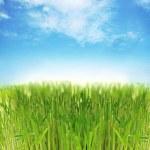 Fresh grass — Stock Photo