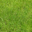 Vivid green grass — Stock Photo