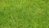 Vivid green grass — Stock Photo