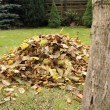 Pile of fallen autumn leaves — Stockfoto