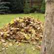 Pile of fallen autumn leaves - Stock Photo