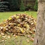 Pile of fallen autumn leaves — Stock Photo