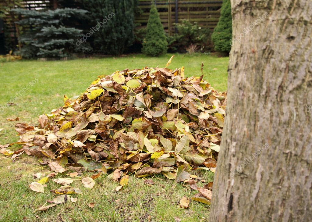 Pile of fallen autumn leaves in garden — Stock Photo #4637788