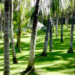 Palm trees on the grass — Stock Photo