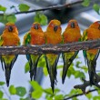 Five Colorful Parrots — Stock Photo #5075422