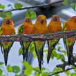 Stock Photo: Five Colorful Parrots