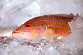 A fresh fish on ice. — Stock fotografie