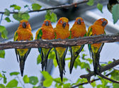 Five Colorful Parrots — Stock Photo