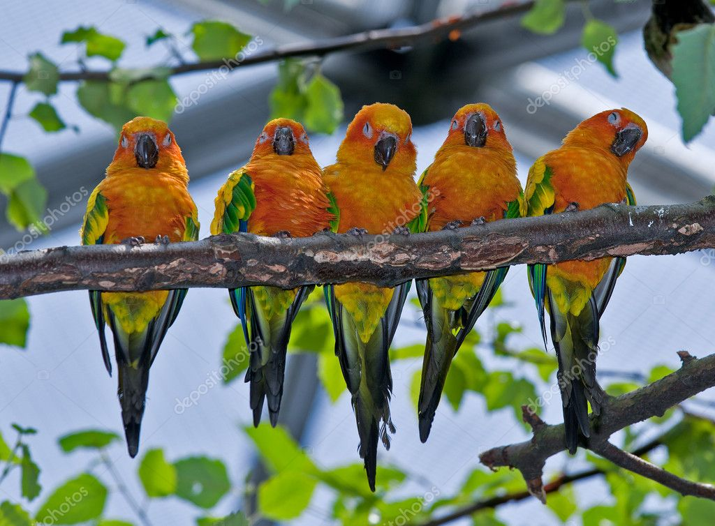 Five Colorful Parrots Sitting on a Branch — Stok fotoğraf #5075422