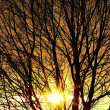 Autumn sun behind branches of bare tree — Stock Photo #4962484