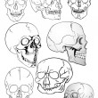 Stock Vector: Vector various skulls