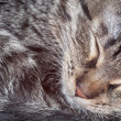 Sleeping kitten — Stock Photo #5075697
