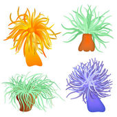 Various sea anemones - vector — Stock Vector
