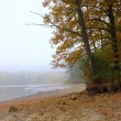 Stock Photo: Misty morning