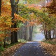 Stock Photo: Road in the autumn forest