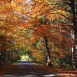 Road in the autumn forest — Stock Photo
