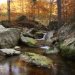 Mountain creek in a forest in autumn — Stock Photo