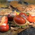 秋の組成 — ストック写真