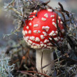 Stock Photo: Red teadstool macro