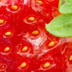 Fotografía macro de fresa — Foto de Stock