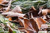 Mroźny liści jesienią — Zdjęcie stockowe