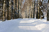 Snow alley — Stockfoto