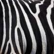 Stock Photo: Zebra pattern