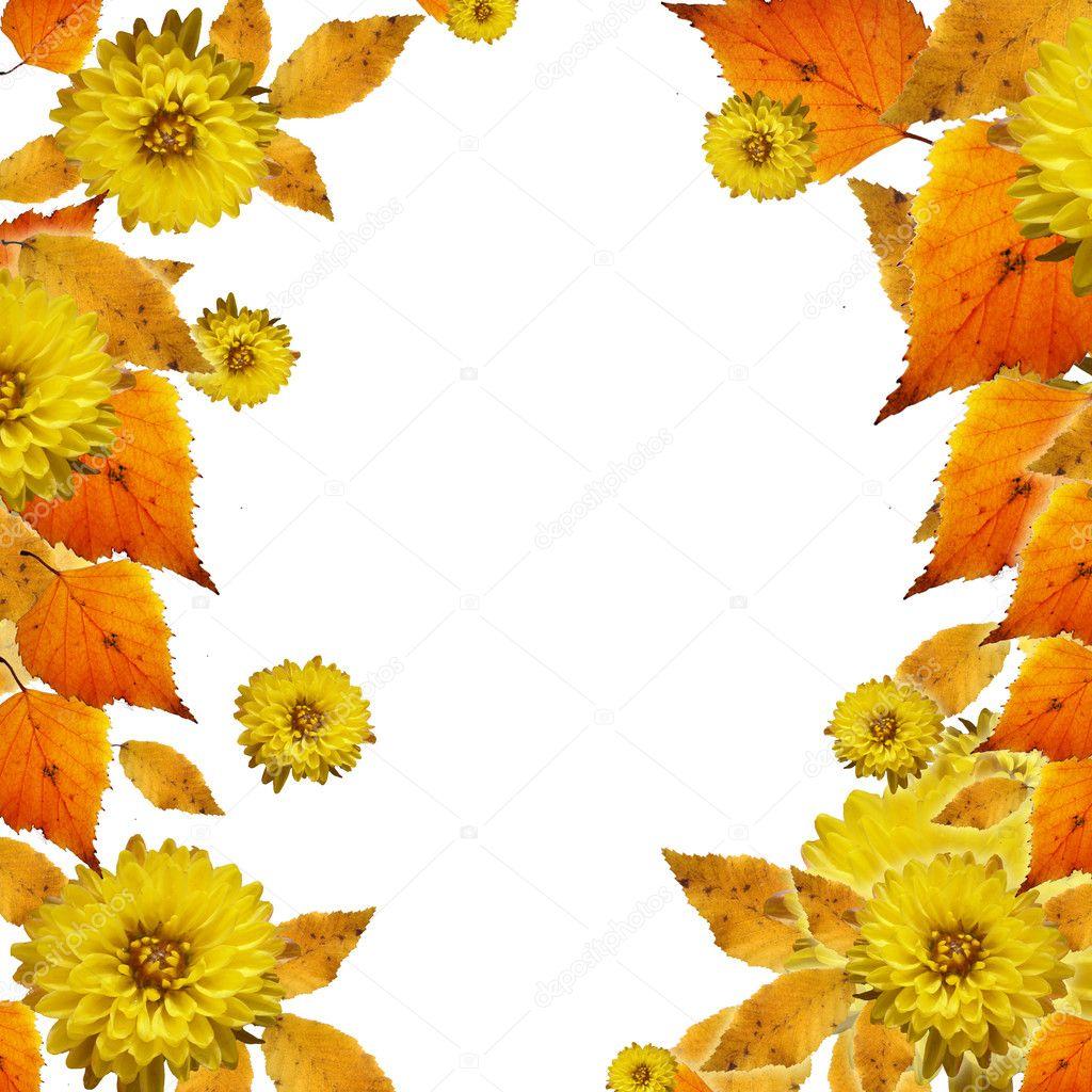 秋天的叶子在白色背景上的照片边框