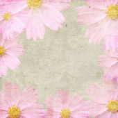 Grunge pink background with daisy — Stock Photo