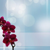 Pink orchid against bokeh blue background — Stock Photo