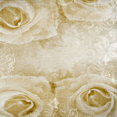 Grunge romantic background with beige roses — Stock Photo