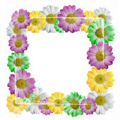 Colorful Flowers chamomiles frame isolated — Stock Photo