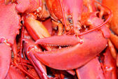 Lobster claws — Stockfoto