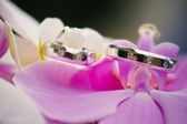 Wedding rings with pink orchid — Stock Photo