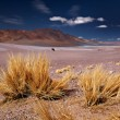 Altiplano grass Paja brava close to Salar Aguas Calientes and Cerro Losloyo - Stock Photo
