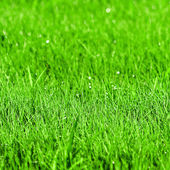 Green grass background with shallow DOF — Stock Photo
