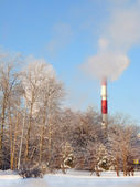 Ecological issues. Smoking chimneys and winter wood — Stock Photo
