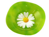 Green plate with daisies isolated on white background — Stock Photo