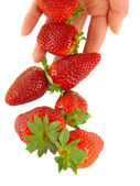 Strawberry falls on women's hands — Stockfoto