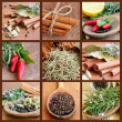 Collage with Spices — Stock Photo