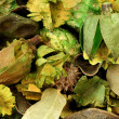 Potpourri background — Stock Photo