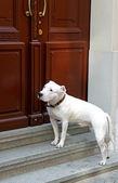 Dog and door — Stock Photo