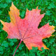 Stock Photo: Autumn maple leaf