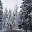 Winter Road — Stock Photo #5333982