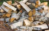 Birch firewood — Stock Photo