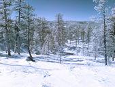 Infrared landscape — Stock Photo