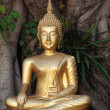 Golden Buddha statue — Stock Photo #5214826