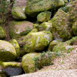 Rocks in forest — Stock Photo #4720750