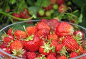 Sweet strawberry fruit — Stock Photo